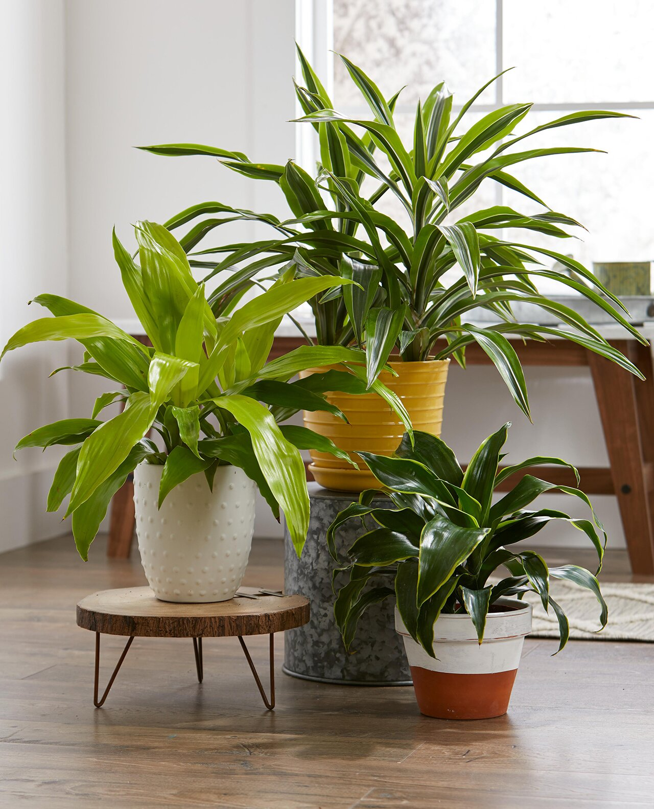 Local Plants For Your Home Garden